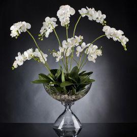 Aranjament floral PHALENOPSIS PLANT - Evambient VG - Aranjamente florale LUX