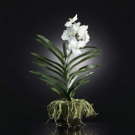 Aranjament floral NEW PLANT VANDA - Evambient VG - Aranjamente florale LUX