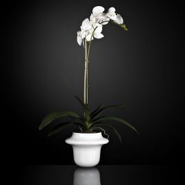 Aranjament floral ATOLLO 1 WITH PHALENOPSIS SMALL