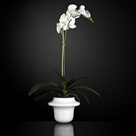 Aranjament floral ATOLLO 1 WITH PHALENOPSIS SMALL - Evambient VG - Aranjamente florale LUX
