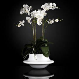 Aranjament floral ATOLLO 3 WITH PHALENOPSIS BIG - Evambient VG - Aranjamente florale LUX