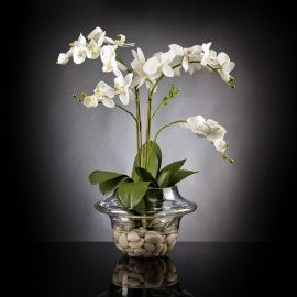 Aranjament floral LIGHT ATOLLO 2 PHALENOPSIS MEDIUM - Evambient VG - Aranjamente florale LUX