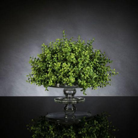 Aranjament floral ALZATA EUCALYPTUS