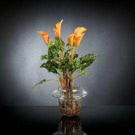 Aranjament floral ALFEO CALLA TRIS portocaliu