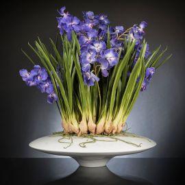 Aranjament floral LUX CYMBIDIUM, 80x95cm - Evambient VG - Aranjamente florale LUX