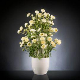 Aranjament floral BABILON RANUNCOLO BIG 95cm, alb - Evambient VG - Aranjamente florale LUX