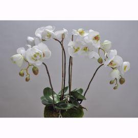 Aranjament floral ORCHID O/SOIL WHITE 48cm - Silk-ka - Aranjamente florale LUX