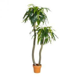 Obiecte decorative - Planta artificiala decorativa pentru exterior DRACENA VERDE 160cm