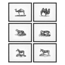 Set 6 tablouri Historical Animals
