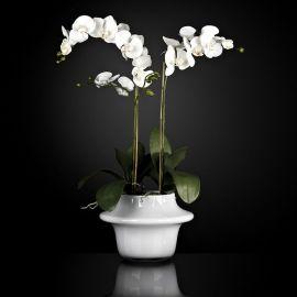 Aranjamente florale LUX - Aranjament floral ATOLLO 2 WITH PHALENOPSIS MEDIUM