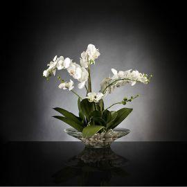 Aranjamente florale LUX - Aranjament floral PLATE PHALENO