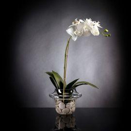 Aranjament floral LIGHT ATOLLO 1 PHALENOPSIS SMALL