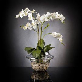 Aranjamente florale LUX - Aranjament floral LIGHT ATOLLO 2 PHALENOPSIS MEDIUM
