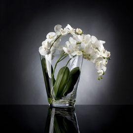 Aranjamente florale LUX - Aranjament floral TROPICAL PLANT