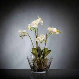 Aranjamente florale LUX - Aranjament floral PHALENOPSIS CLUMP