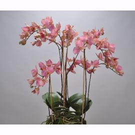 Aranjamente florale LUX - Aranjament floral ORCHID O/SOIL RED 75cm