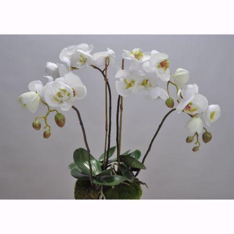 Aranjamente florale LUX - Aranjament floral ORCHID O/SOIL WHITE 48cm