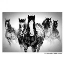 Tablouri - Tablou decorativ Cai alb/ negru, 120x80cm