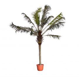 Aranjamente florale LUX - Planta artificiala decorativa Palmera, 250cm