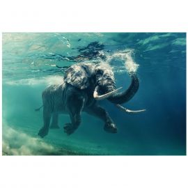 Tablouri - Tablou decorativ, imagine imprimata pe sticla calita ELEPHANT 120x80cm