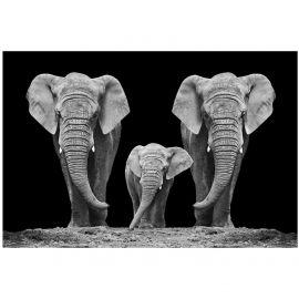 Tablouri - Tablou decorativ, imagine imprimata pe sticla calita ELEPHANT FAMILTY 120x80cm