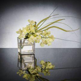 Aranjamente florale LUX - Aranjament floral mic decor festiv design LUX ETERNITY CUBO MINI PHALAENOPSI