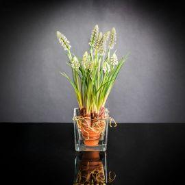 Aranjamente florale LUX - Aranjament floral mic decor festiv design LUX ETERNITY CUBO MUSCARI IN COTTO